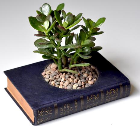 Buch-Blumentopf